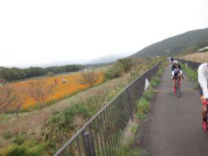 さっきの黄花コスモスを見ながら山中湖へ移動。