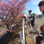 今年は早咲きの河津桜