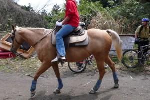 林道には馬もいました