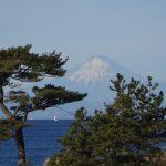 立石の松と相模湾と富士山